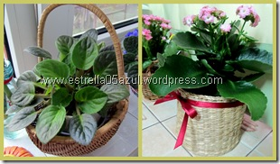 basket plant covers